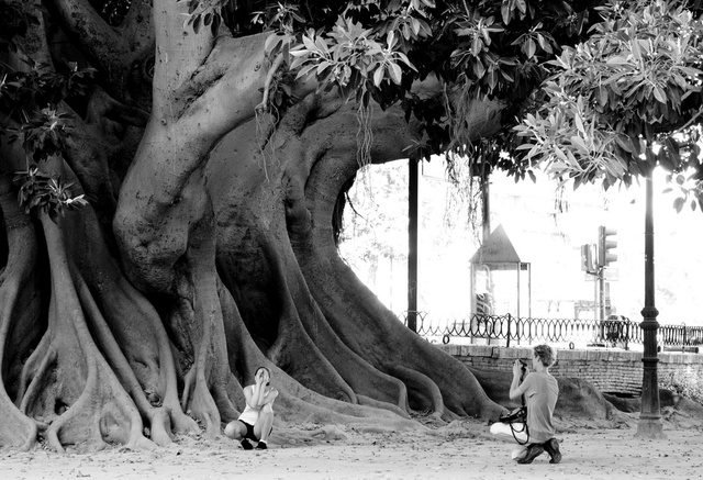 300 year old ficus