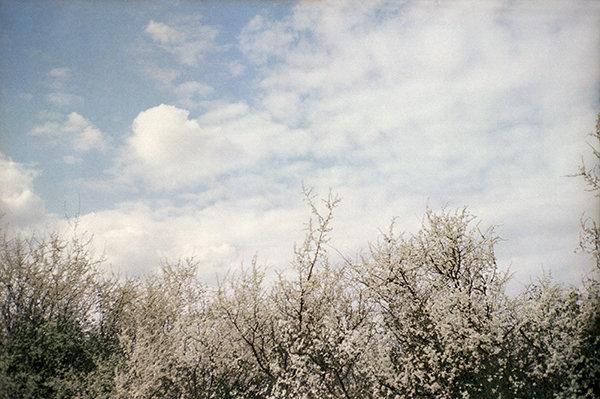 biancospino-copia-wb.jpg