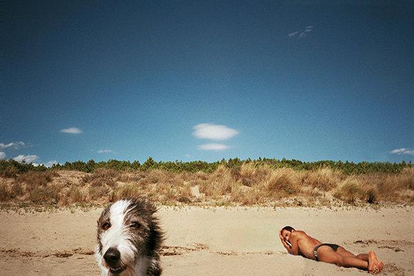 dog-first-beach-rt.jpg