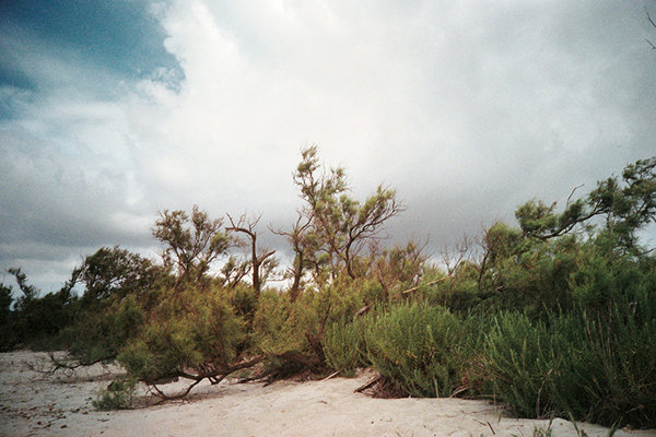 tds-green-beach.jpg