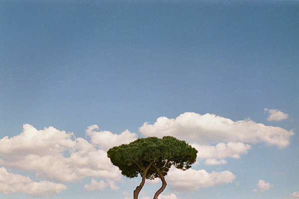 pino-skyscape.jpg