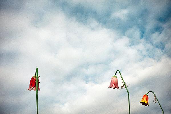 lunar-park-fiori.jpg