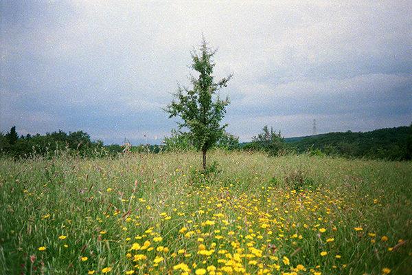 alberino-montioni.jpg