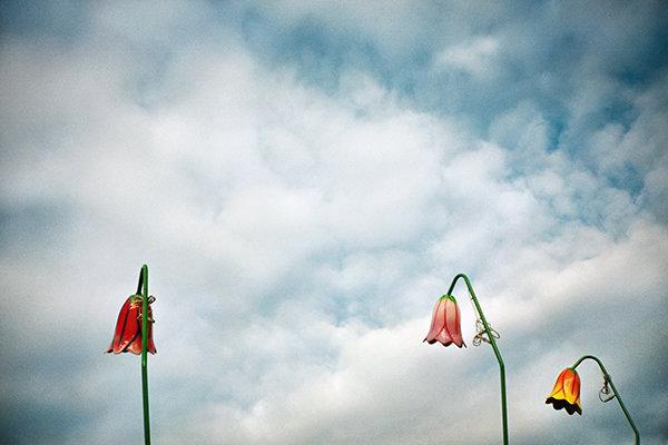 lunar-park-fiori-ok-a.jpg