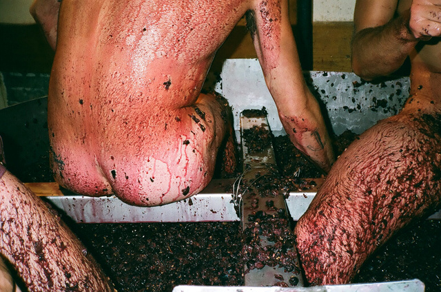 le cul dans le raisin.jpg