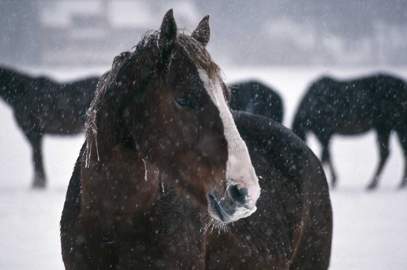 Oregon horse snow.jpg