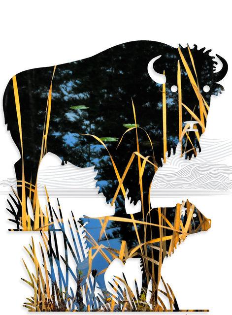 buffalo-03m.jpg