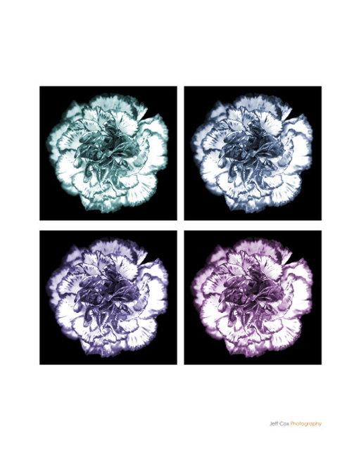 flowersC.jpg