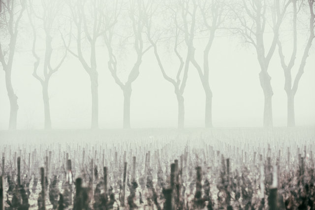 Brouillard dans les vignes 295-Modifier-Modifier.jpg