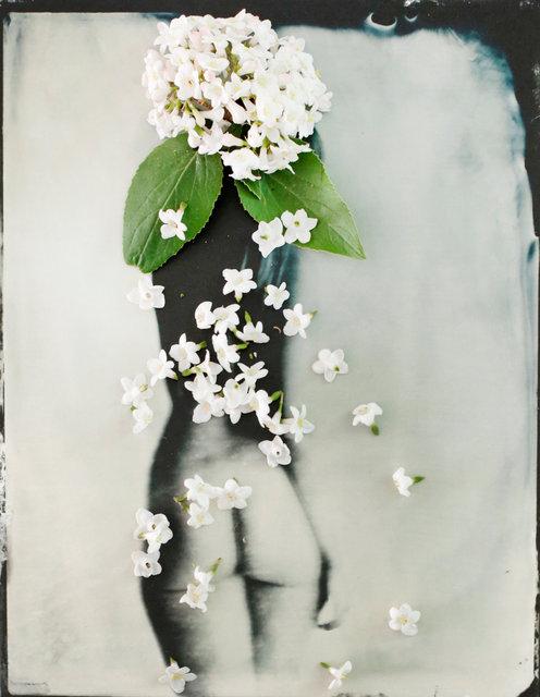 FLOWERS_1_004.JPG
