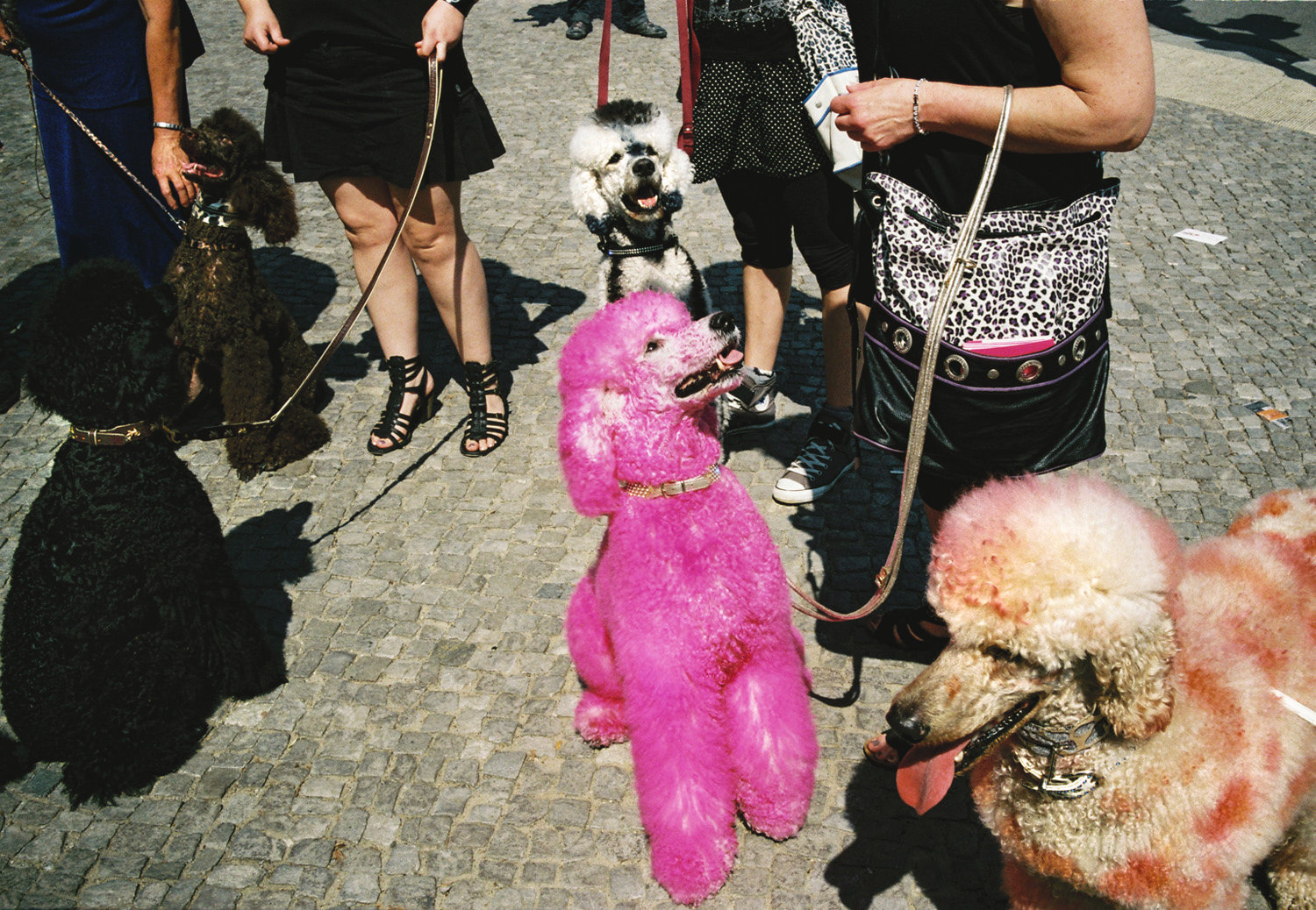 a Man's best friend, Berlin, 2011.jpg