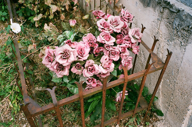 roses, impression céramique, 2009.jpg