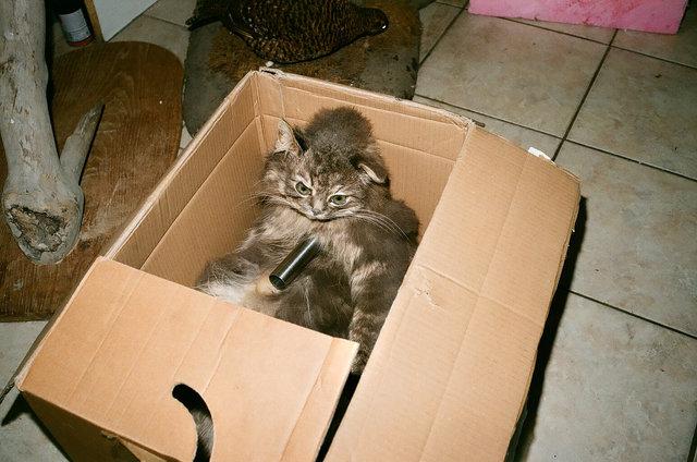 cat in the box, Zehlendorf, 2012.jpg
