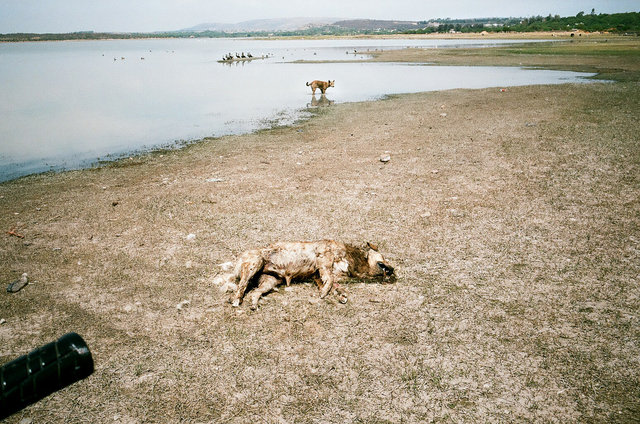 dead and living dogs, San Miguel, 2012.jpg