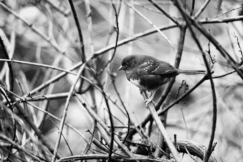 Bird.jpg