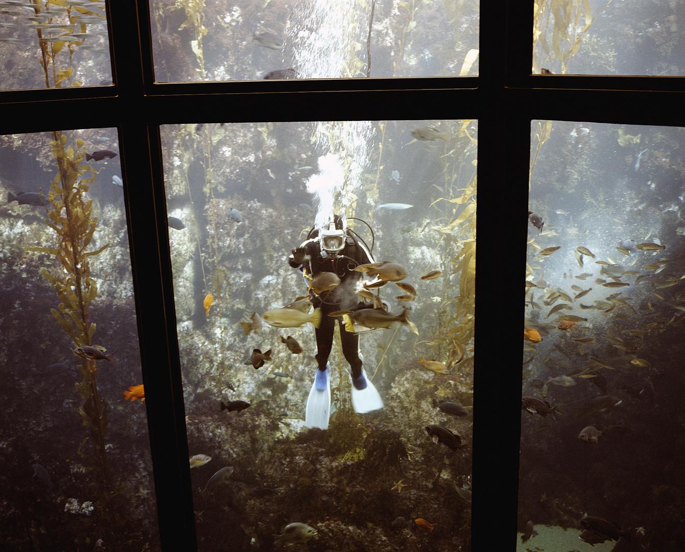 Monterrey aquarium