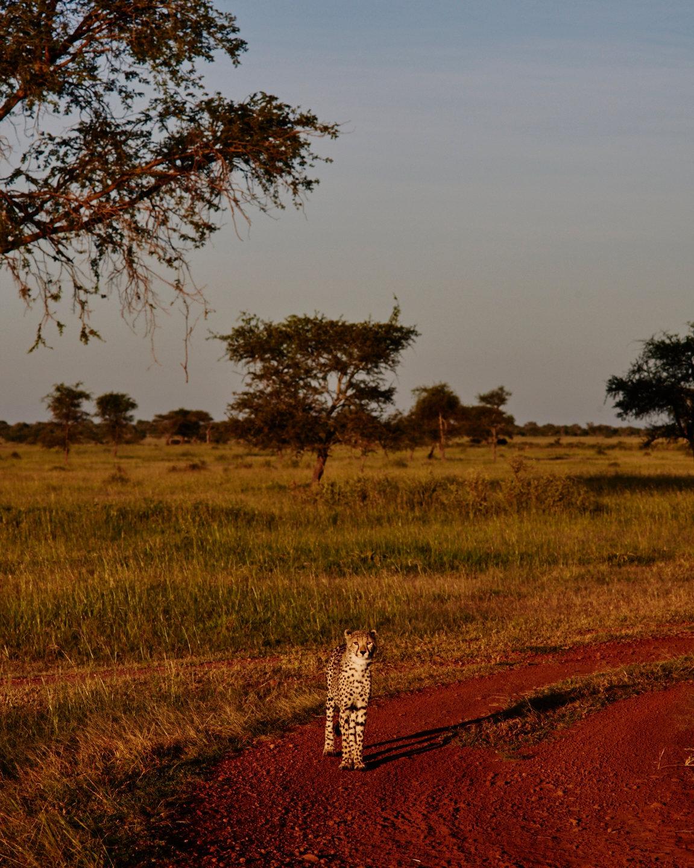 2016_BM_BA_Tanzania-0492.jpg