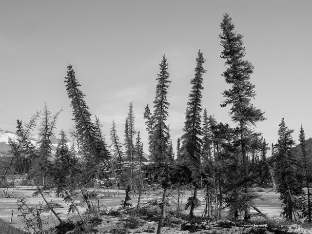 DrunkenTrees, Alaska 2017