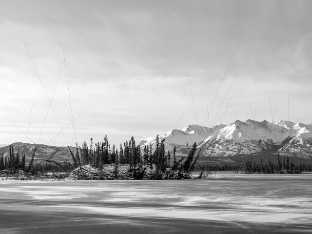 Drunken trees on thermokarst lake, Alaska 2017