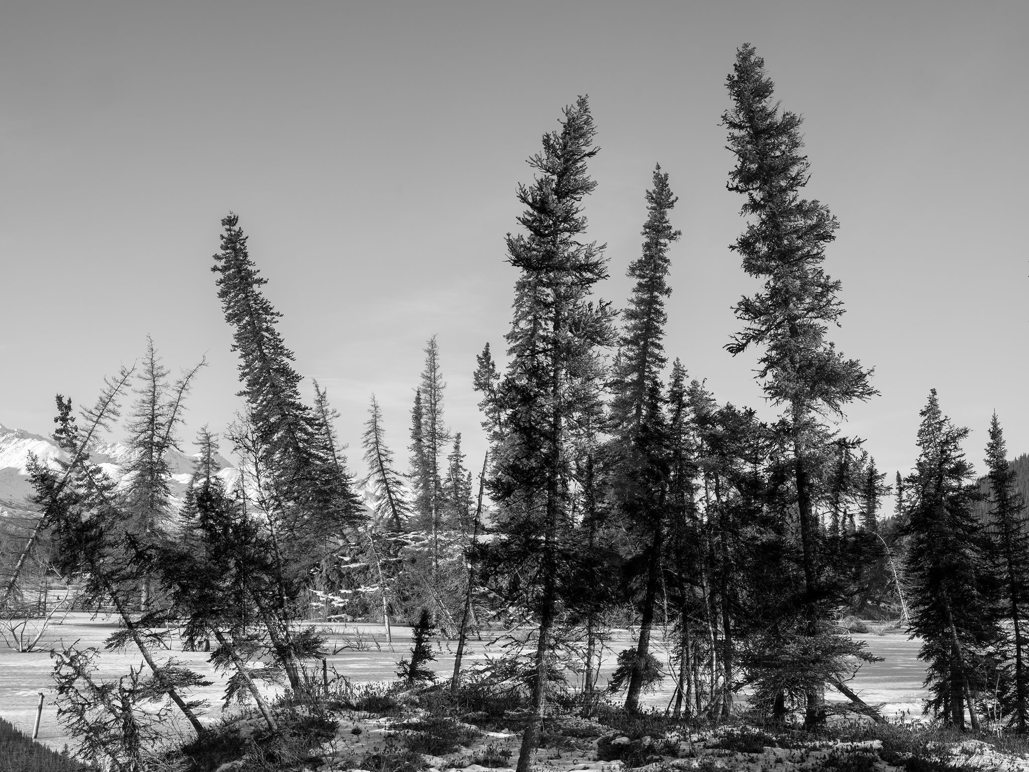 Trees_Montage03 Kopie.jpg