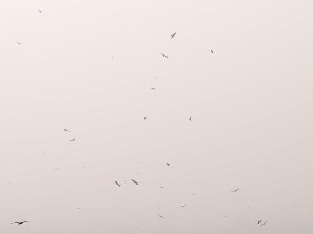 BirdsSmog2.jpg