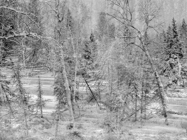 Drunken Forrest, Alaska 2017