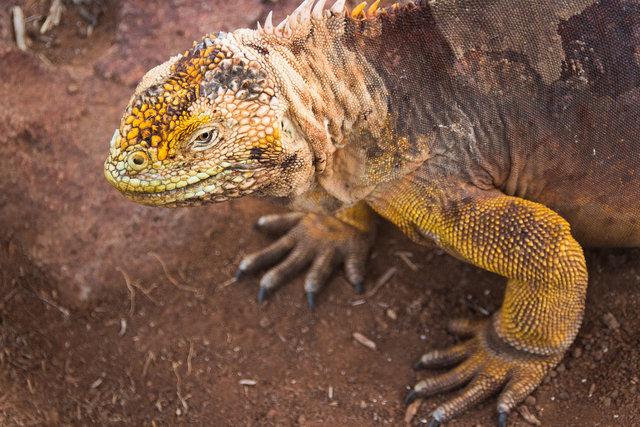 150418_Galapagos-1076.jpg