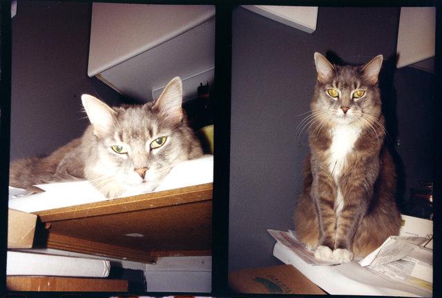 cat diptych 3.jpg
