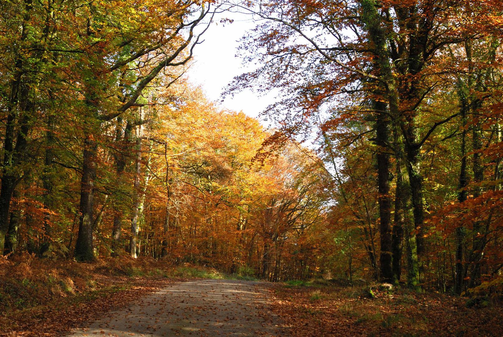 Forêt de Quénécan