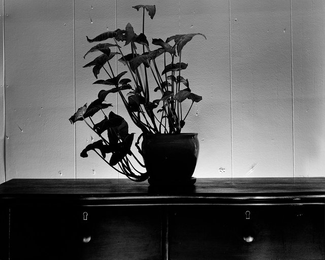 Ashely Broderick, Plant, 2015