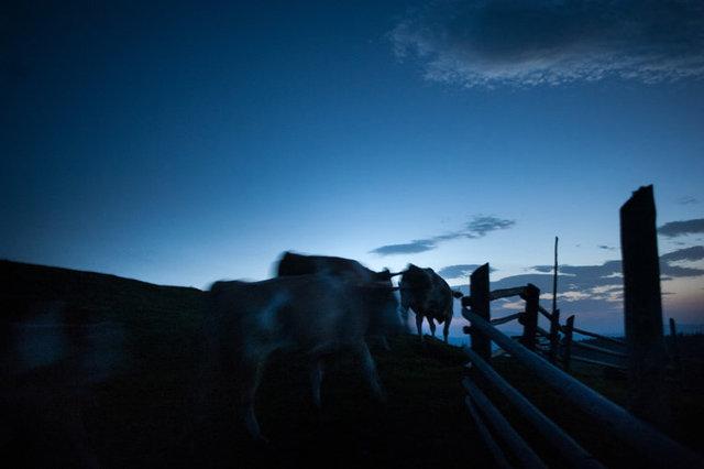 shepherds_002.jpg