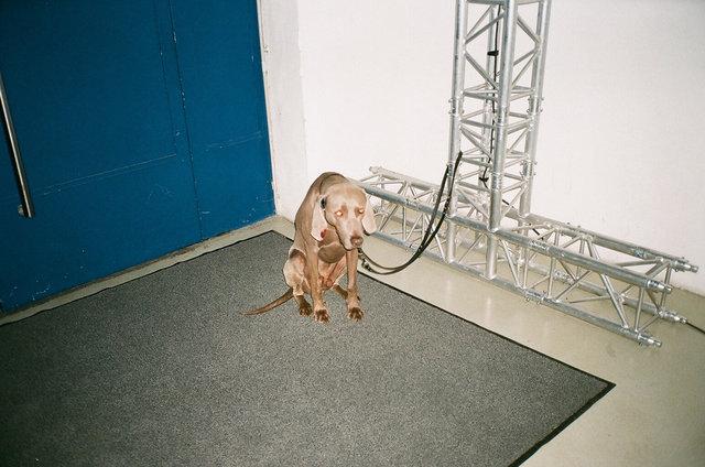 chien brun et triste, Berlin