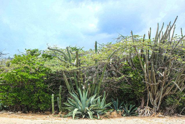 Aruba scapes_9.jpg