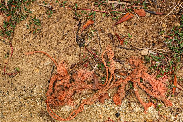 Aruba scapes_Mangrove Grounds.jpg