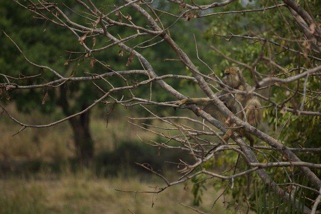 Malawi_014.jpg