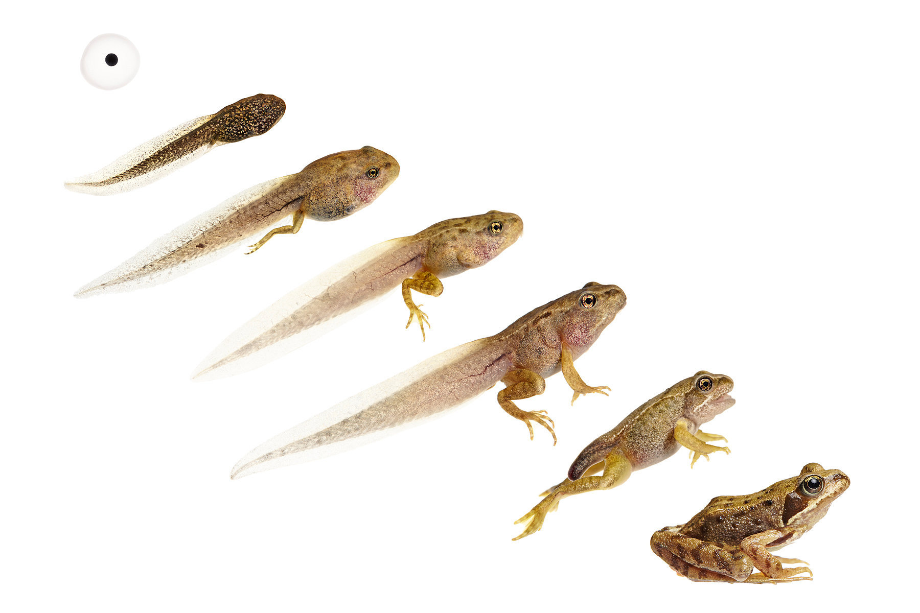 Frog Life Cycle-1.jpg
