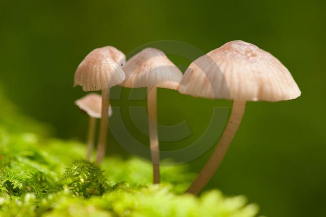 Pflanzen_Copyright_402.jpg