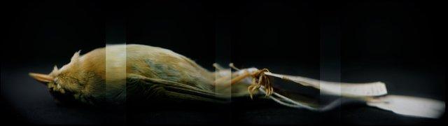 Worm-eating Warbler (<i>Helmitheros vermivorum</i>), Holga 120N, Kodak Ektar 100, 2015