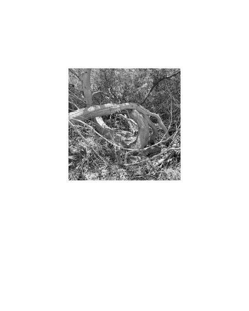 44b_riquadrato(L18)40x50_web.TIF