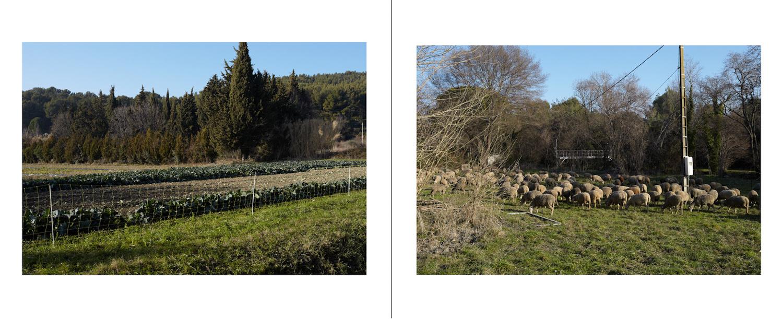 saint_chamas_paysages54.jpg