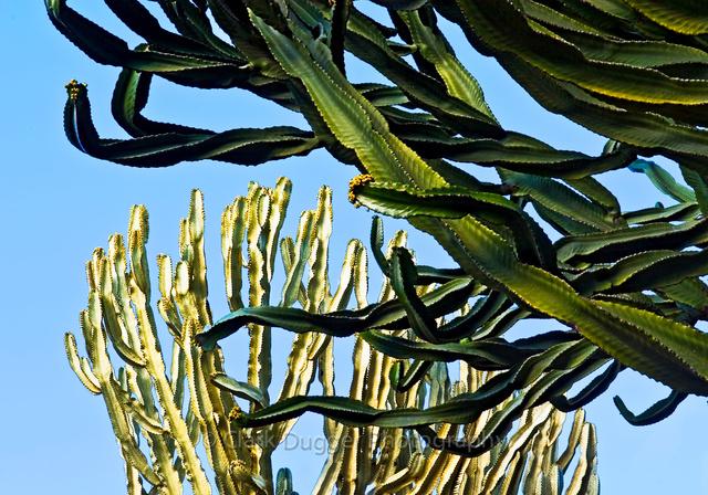 Cactus_at_PV_Botanical.jpg