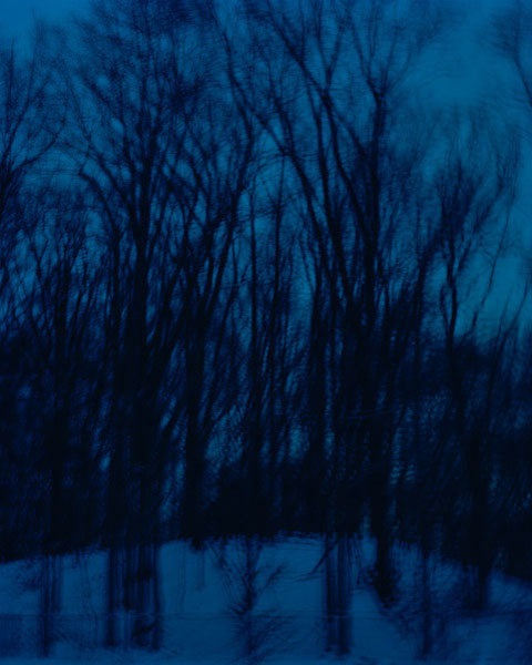 Trees in the Twilight, New Jersey, 2008