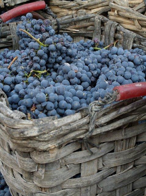 Vendamia 2007 Produttori
