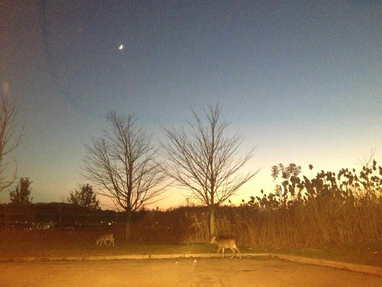 deer!!!!.jpg