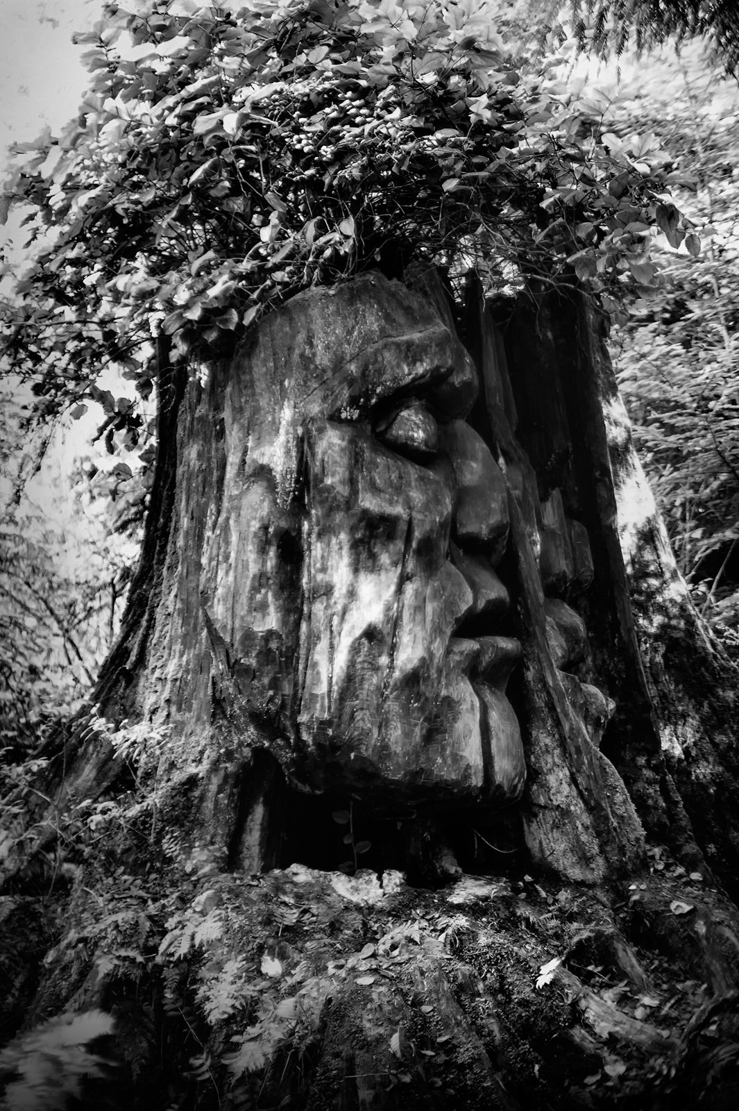 Tree-bw91.jpg