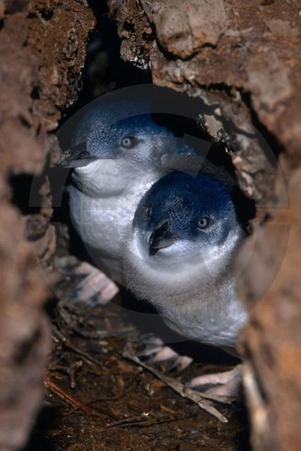 Tiere-Vögel-48.jpg