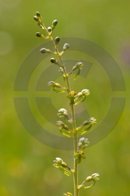 Pflanzen_Copyright_360.jpg