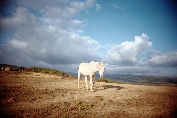 cavallo-wb.jpg