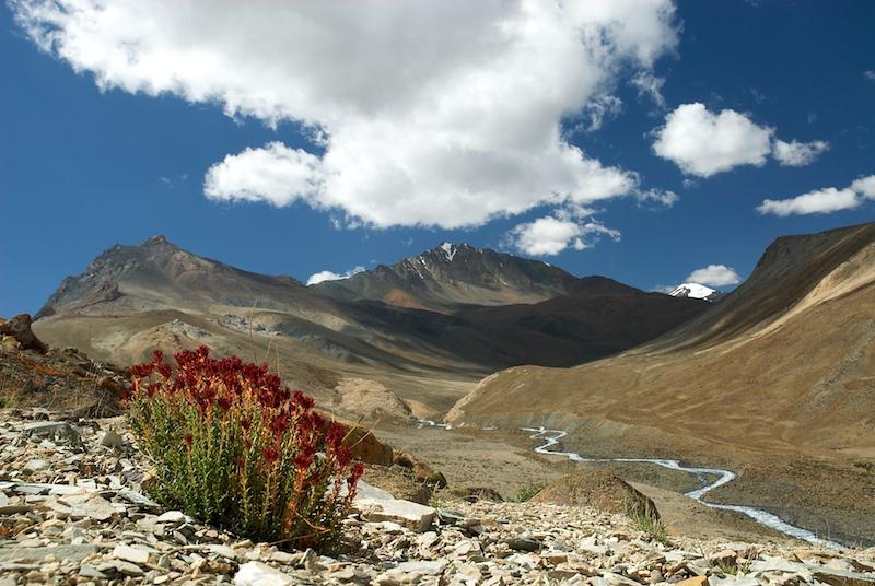 Ladakh_23.jpg