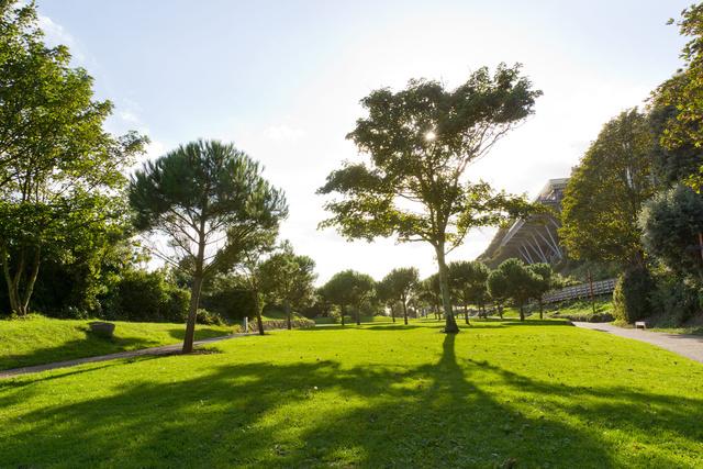Coastal Park Trees.jpg